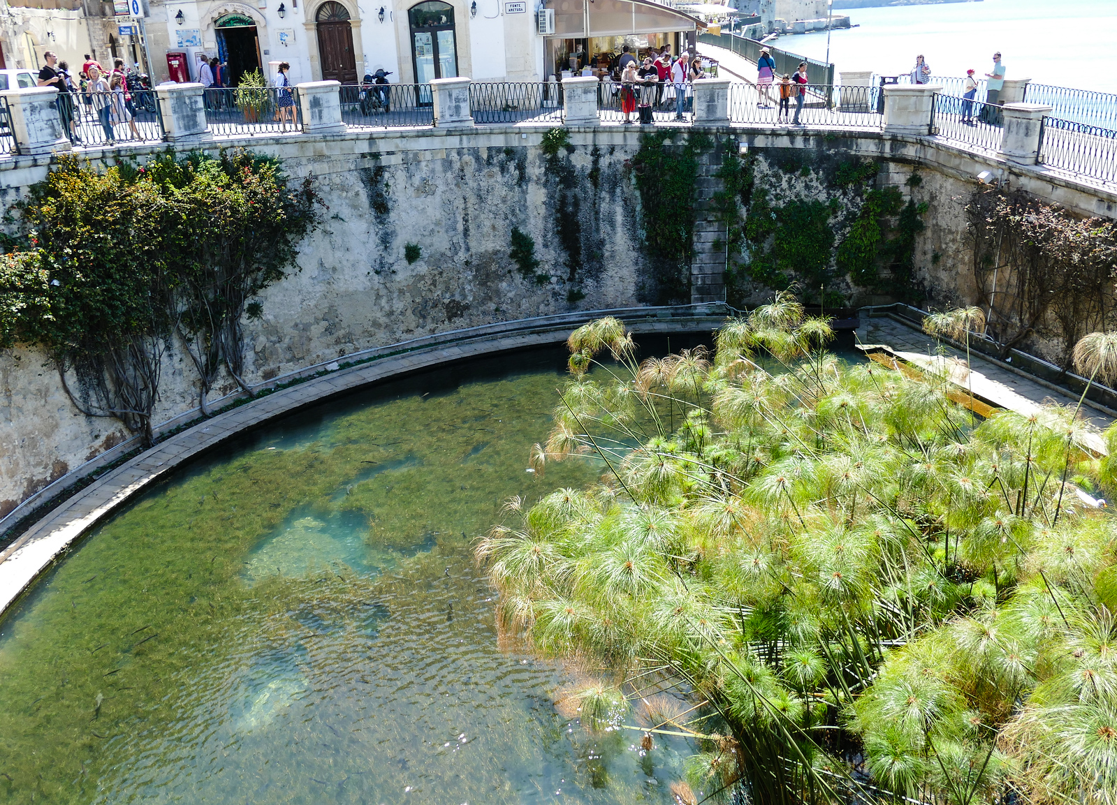 A freshwater spring by the sea in Syracuse surrounded by concrete walls and columns.
