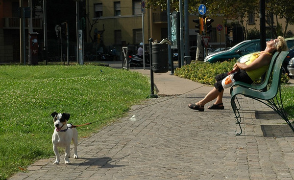 Sleeping Lady and Dog at the Park - Bologna - Bologna, Italy