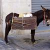 Eco-Donkey