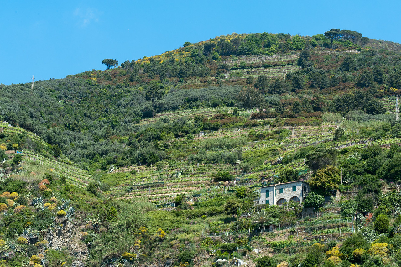 A house standing amidst lush mountain in Cinque Terre, Italy