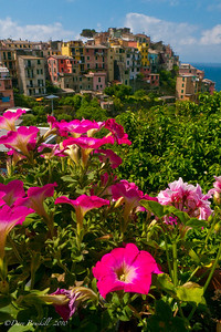 Flowers everywhere in Corniglia while hiking the Cinque Terre Villages in Italy