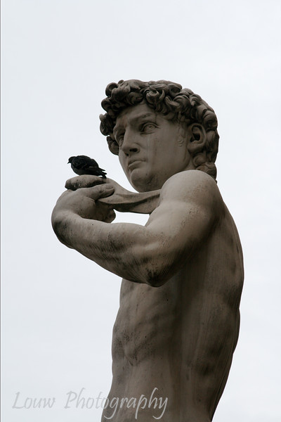"Copy of <a target=""NEWWIN"" href=""http://en.wikipedia.org/wiki/Michelangelo's_David"">David</a> at <a target=_blank href=""http://en.wikipedia.org/wiki/Piazza_della_Signoria"">Piazza della Signoria</a>, Firenze"