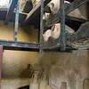 Italy, Herculaneum, Amphorae Wine Containers
