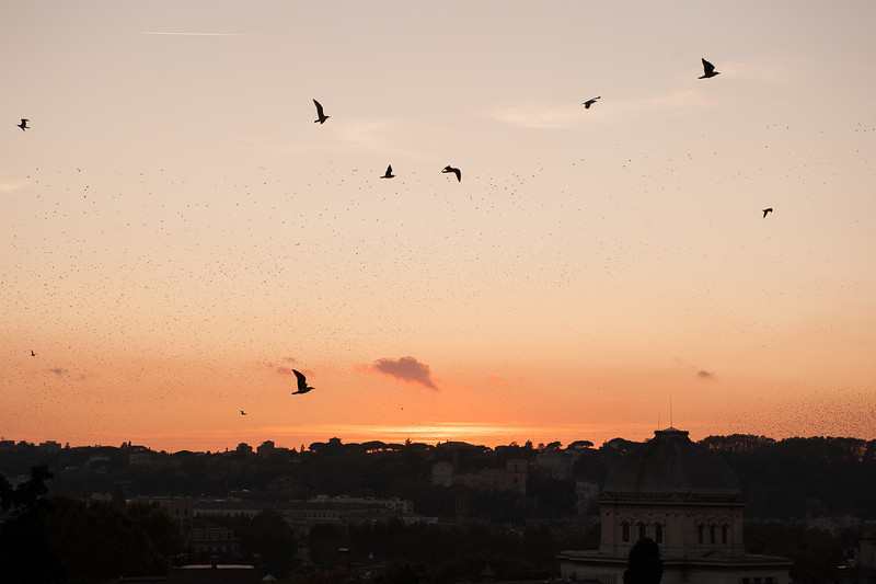 Thousands of Birds at Sunset