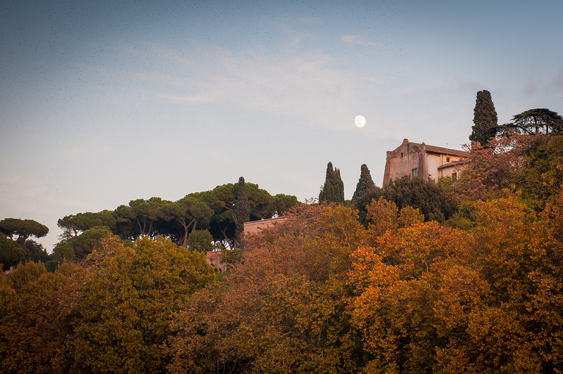 Moon Rise Over Palatine Hill - Rome
