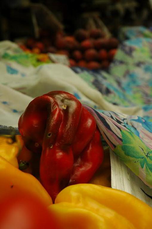 Rotting Pepper - Genoa, Italy