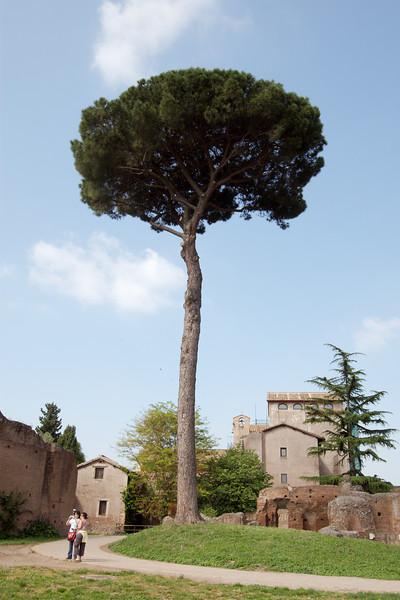 """<a target=""""NEWWIN"""" href=""""http://en.wikipedia.org/wiki/Palatine_hill"""">Palatino (Palatine Hill)</a>, Roma"""