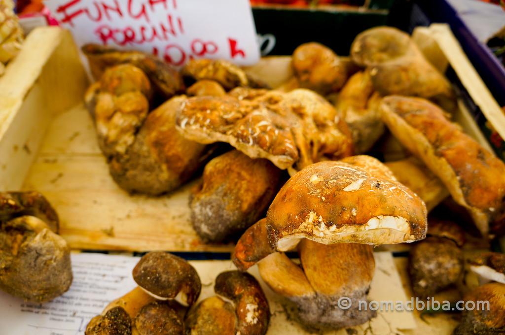 Porcini mushrooms at Campo de' Fiori market in Rome, Italy