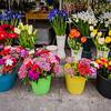 Flower Market, Palermo