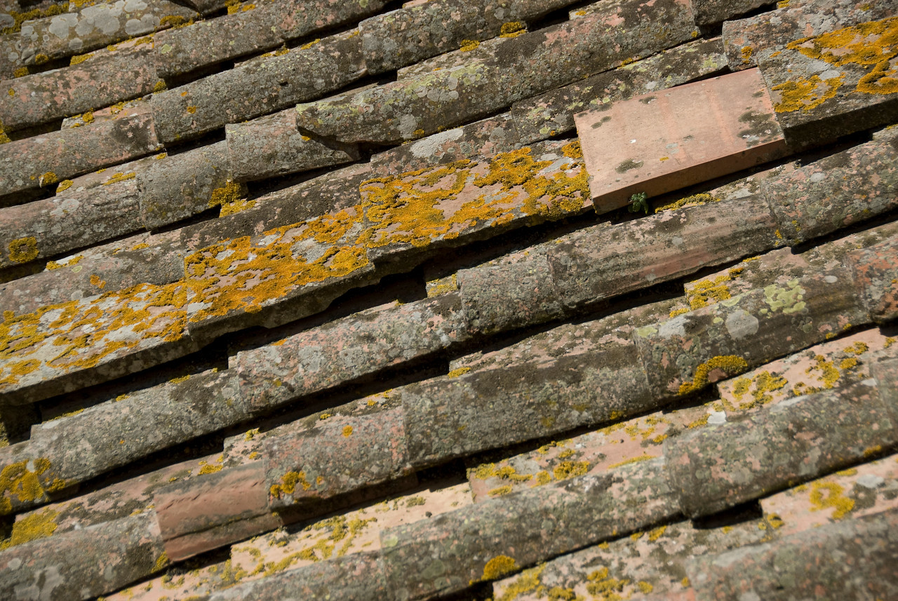 Wooden planks with moss in Siena, Italy