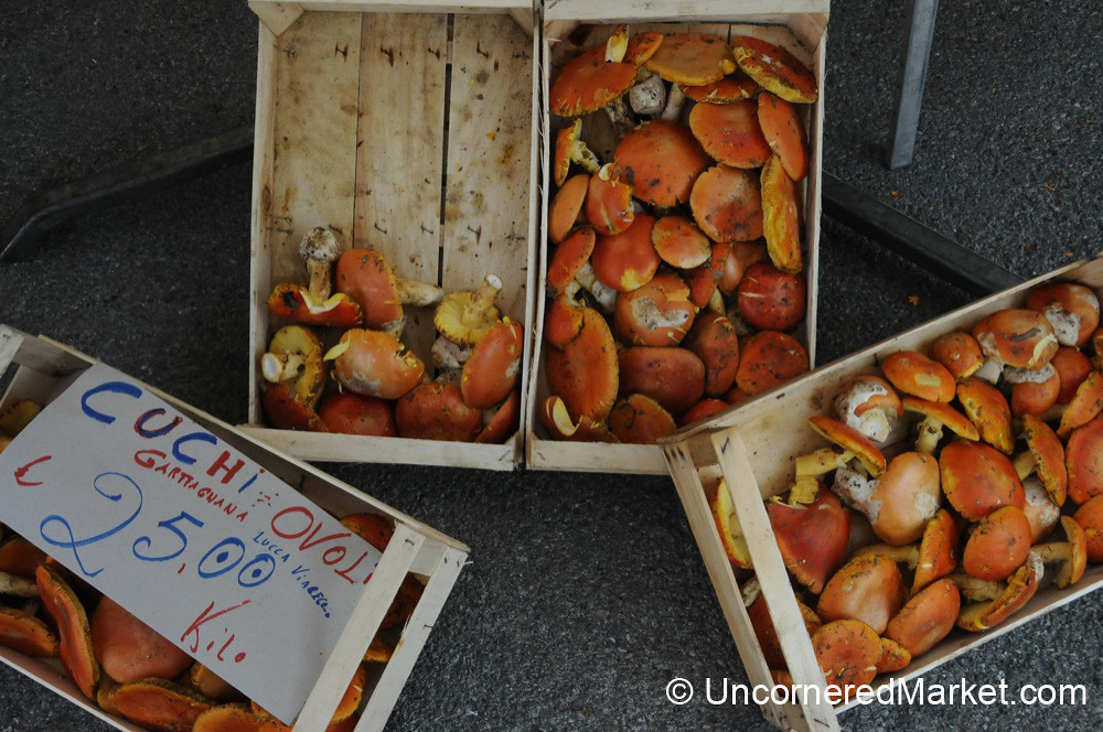 Mushroom Season in Tuscany