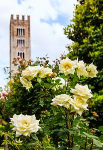 Flowers of Palazzo Pfanner