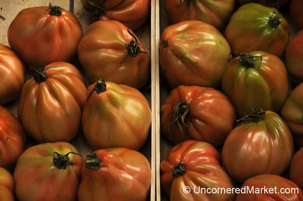 Unusual Tuscan Tomatoes - Torrita di Siena, Italy