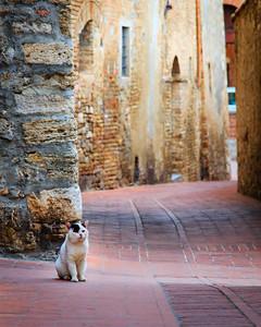 Lucca Cat