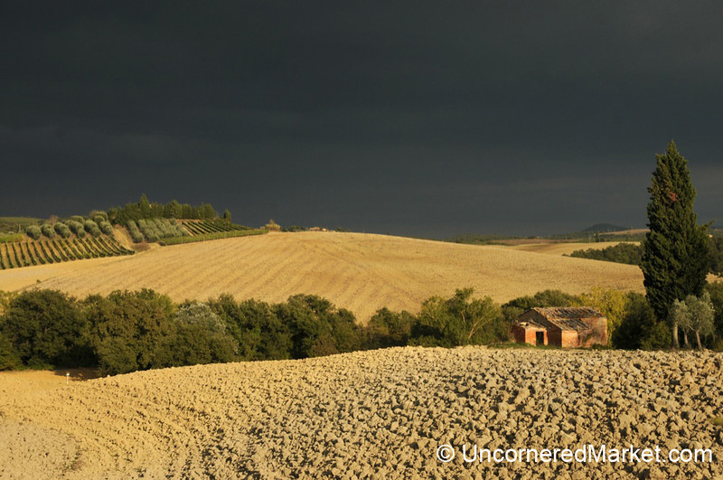 Golden Landscape in Tuscany, Italy