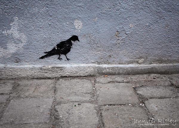 Pigeon Graffiti