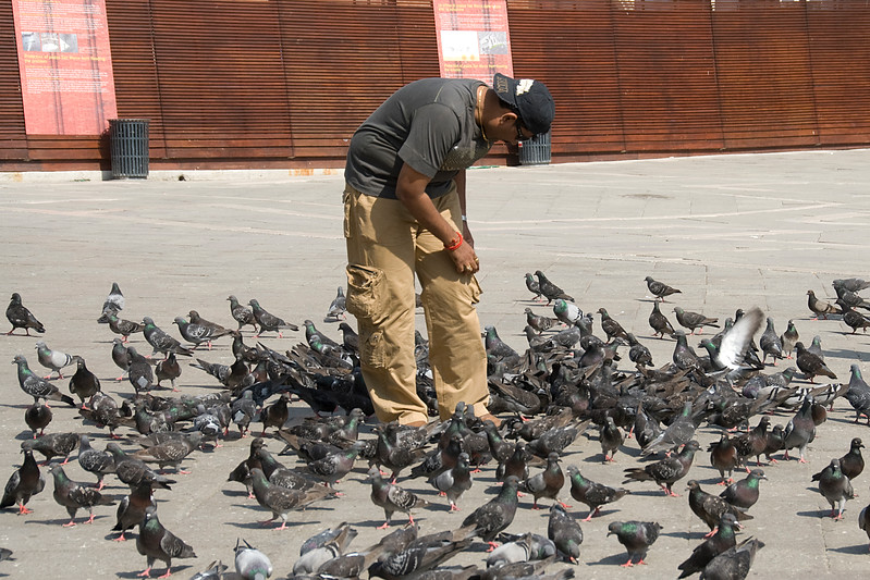 Man feeding the pigeons at the street of Venice, Italy