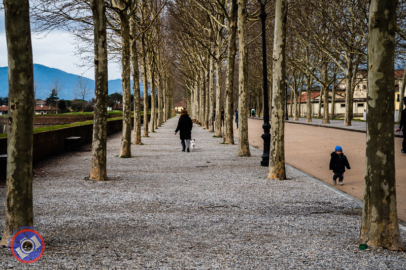 The City Wall in Lucca Showing the Tree-Lined Paths and Roadway on Top of the Wall (©simon@myeclecticimages.com)