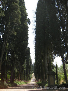 Path of Trees in Tuscany