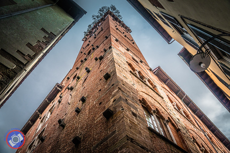 Looking Up at the Torre Guinigi with the Roof Top Garden Just Visible (©simon@myeclecticimages.com)