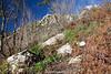 Valle Salicerchie, Ravello, Amalfi coast, Campania, Italy.