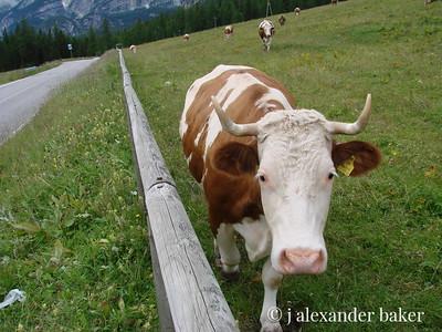 Moo ma mia - Dolomite Dairy