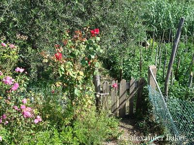 Rustic Tuscan garden gate
