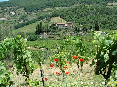 Castello di Lamole from the vinyard above