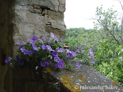 at Castello Lemole