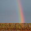 Rainbow, regenboog, arc-en-ciel