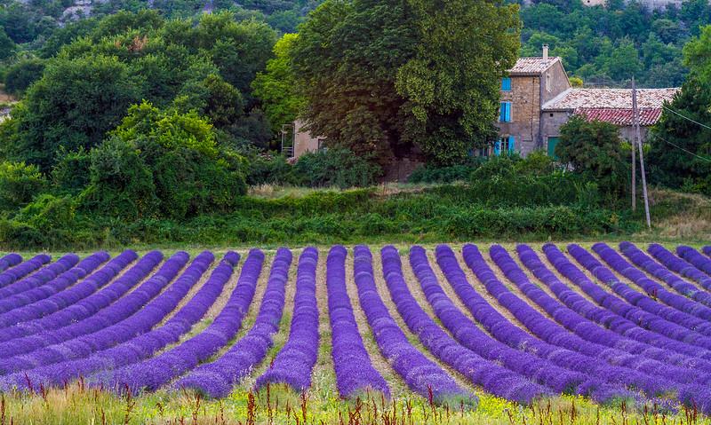 Lavender-1775-01z