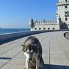 My husky friend at Belem