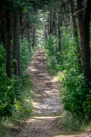 A path in the woods on the Curonian Spit