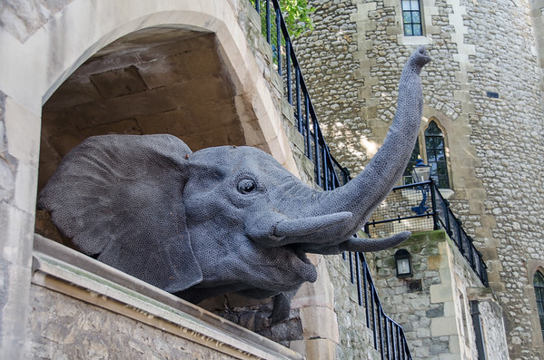 Elephants in the Royal Menagerie, Tower of London