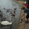 Feeding the geese, swans, and ducks at Hyde Park.