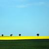 Luxemburg, Canola Fields