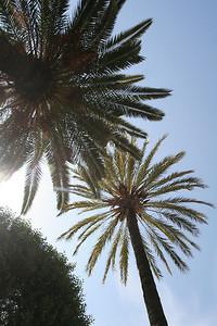 Gardens in Palma