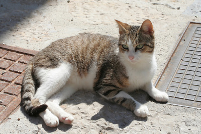Cat in Deia