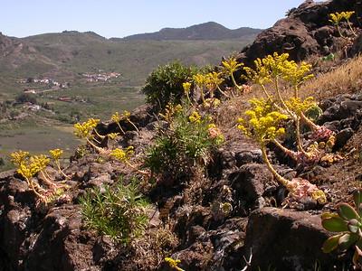 Canary Islands: Tenerife I