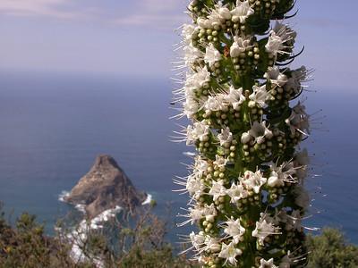 Canary Islands: Tenerife II