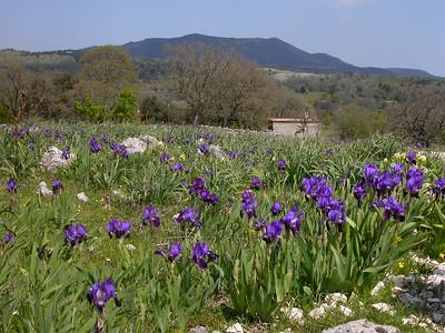 Italy: the Gargano