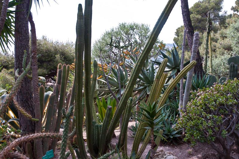 Cactus Garden, Monaco