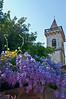 Wisteria and village church steeple in Vinci, Italy. Birthplace of Da Vinci.