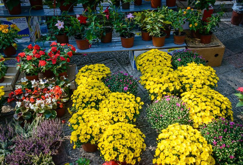 Flowers in Kotor Market