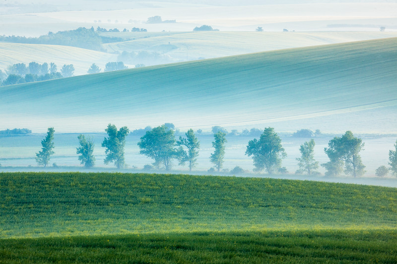 Moravian rolling landscape with trees in early morning