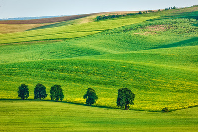 Rolling landscape of South Moravia with trees.