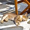 Sleeping kitty in town