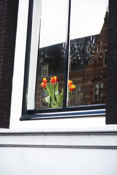Tulips. February 2013