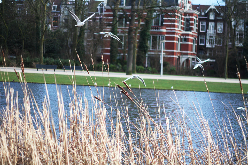 Winter in Vondelpark. February 2013