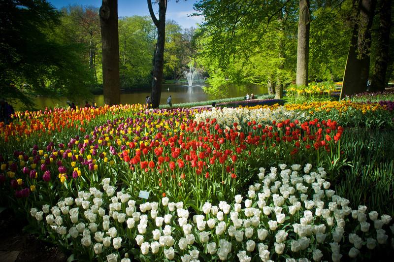 Keukenhof bulb-flower garden
